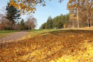 Parco finlandese
